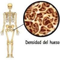 Porque los humanos tienen huesos ¿son importantes?