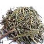 Usos medicinales del Simonillo (Conyza Filaginoides)