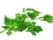 El cilantro es bueno para quitar el mal aliento