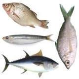 Consecuencias de comer mucho pescado