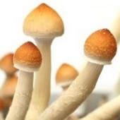 ¿Qué pasa si consumo hongos alucinógenos?