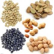 ¿Qué alimentos se consideran legumbres? Ejemplos de legumbres