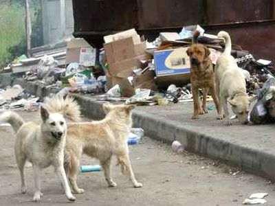 Consecuencias que traen los perros callejeros
