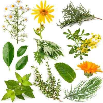 Componentes de los principales principios activos de las plantas medicinales