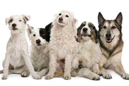 ¿Vivir con muchos perros?