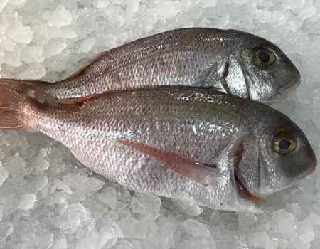 ¿Cómo saber cuándo el pescado es fresco?