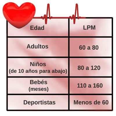 ¿Cuánto late el corazón humano por minuto?