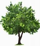 Las ventajas de sembrar un árbol en nuestra casa