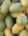 ¿Para qué sirve la fruta dátil como planta medicinal?