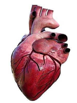 Acciones para proteger el corazón