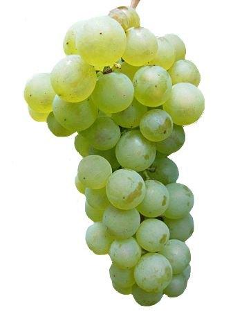 Efectos beneficiosos de las uvas