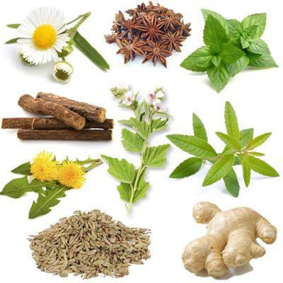 Plantas con propiedades digestivas