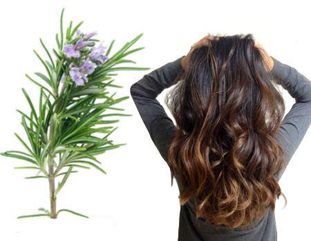 ¿Es bueno el uso del romero caída del cabello en mujeres?
