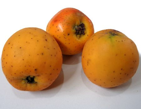 ¿Para qué sirve el fruto de tejocote?