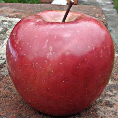 Es bueno comer una manzana todos los días
