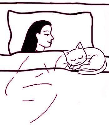 ¿Qué pasa cuando un gato duerme en tu cama?