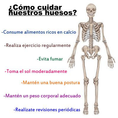 ¿De qué manera debemos cuidar nuestros huesos?