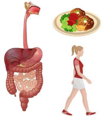 Porque caminar ayuda a la digestión