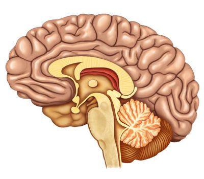 ¿Qué cuidados debemos tener con nuestro cerebro?