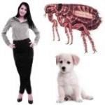 ¿Las pulgas de los perros se pasan a los humano?