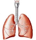 ¿El cuerpo humano puede vivir normalmente con un pulmón?