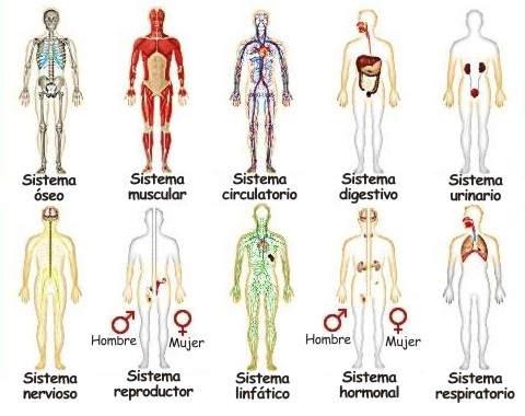 Porque nuestro cuerpo es un sistema integrado, Porque el cuerpo ...
