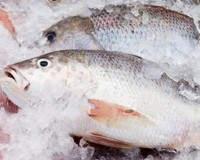 ¿Es malo o es sano el pescado congelado?