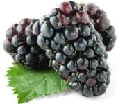 Propiedades  y beneficios de la fruta mora azul