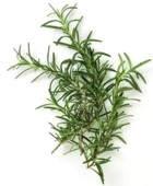 ¿Para qué sirven las hojas de romero en infusión?
