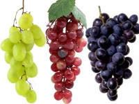 Características importantes de la uva