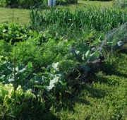 Beneficios de un jardín comunitario