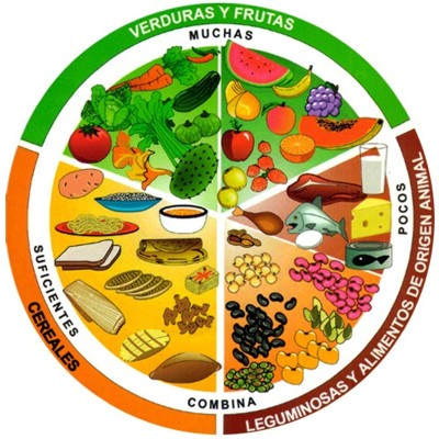 ¿Cuál es el alimento más nutritivo o importante del plato del buen comer?