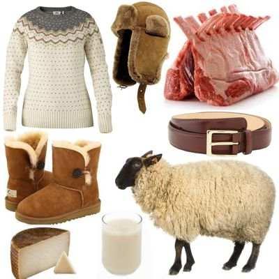 ¿Qué beneficios nos dan las ovejas?