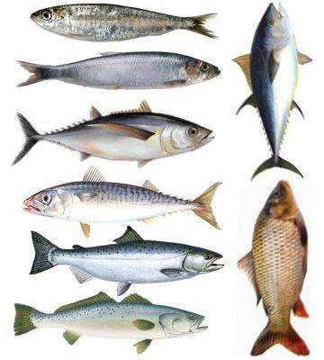 ¿Qué pasa si nunca como pescado?