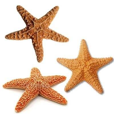 ¿Se comen las estrellas de mar? ¿son comestibles?