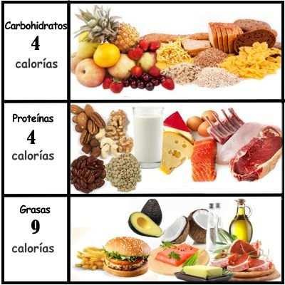 ¿Cuántas calorías aportan los carbohidratos, lípidos y proteínas al cuerpo humano?