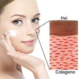 ¿Qué función cumple el colágeno en el ser humano?