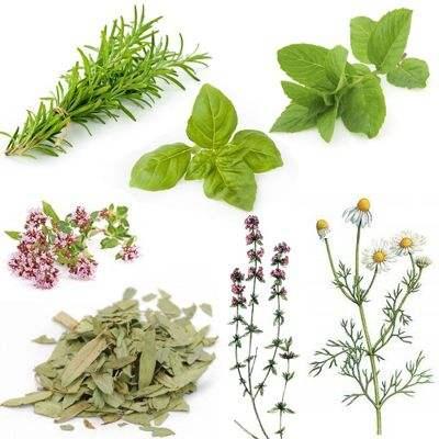 Clasificación de hierbas medicinales de acuerdo a su función farmacológica