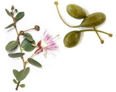 ¿Para qué sirve la alcaparra como planta medicinal?