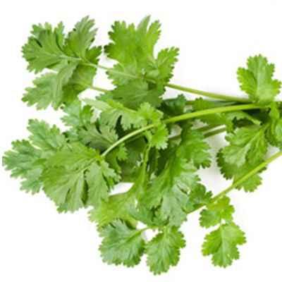 Maravillas del cilantro y su importancia en el consumo humano
