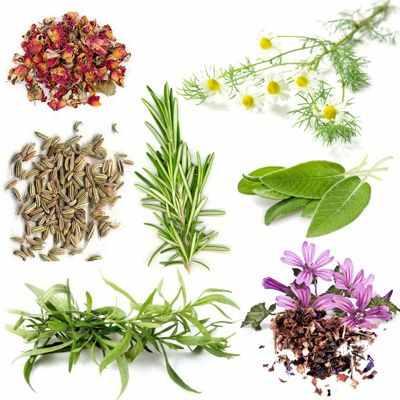 Plantas anti gastritis plantas que ayudan a mejorar la gastritis