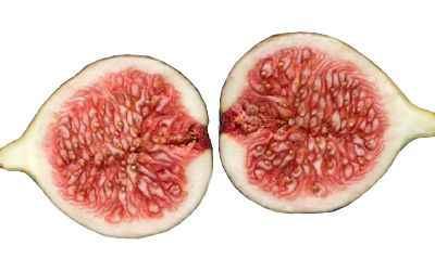 Importancia de los higos en la alimentación ¿Qué aporta al cuerpo humano el higo?
