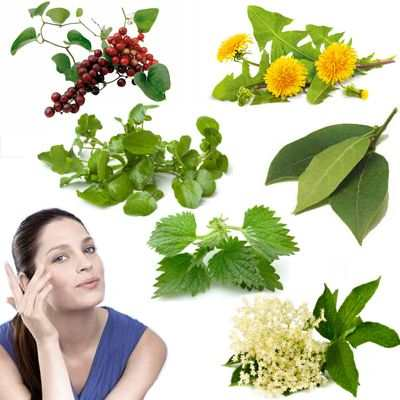 Hierbas curativas y plantas para no sufrir problemas en la piel