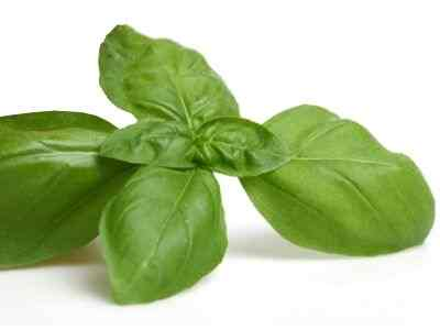 ¿Qué tipo de enfermedades previene y cura la planta albahaca?