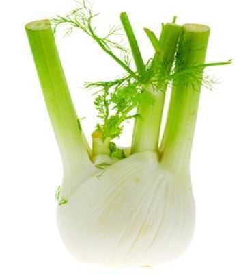Importancia de la planta hinojo ¿qué enfermedades cura la planta hinojo?
