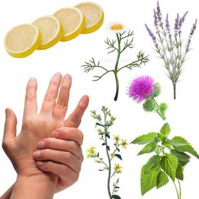 Remedios antiguos con manzanilla, limón, fresas y bardana para la artritis