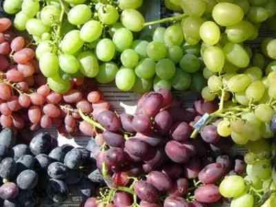 ¿Qué enfermedades previenen y curan las uvas? ¿qué función tienen?