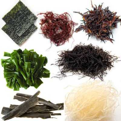 Importancia y porque las algas marinas son apreciadas por los humanos
