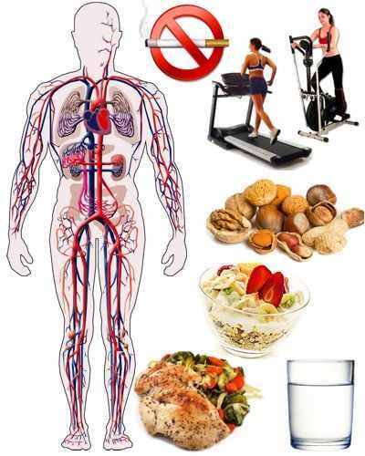 Beneficios de cuidar el sistema circulatorio