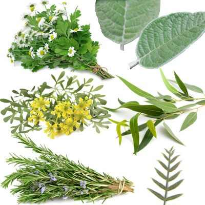 Hierbas medicinales para combatir la frialdad del cuerpo y de los huesos